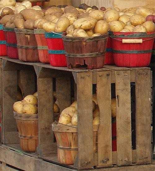 Картофель для хранения
