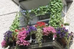 Крепление цветочных ящиков на балконе необходимо выполнять точно придерживаясь плана размещения.