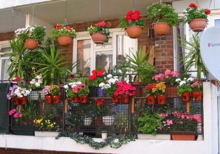 Балкон, оформленный цветами