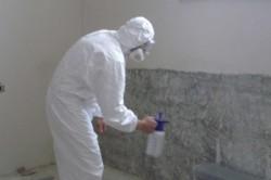 Обработка стен пораженных грибком