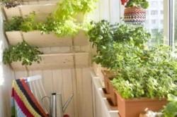 Преимущества выращивания овощей на балконе
