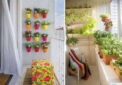 Вырастить рассаду на балконе красиво