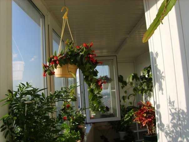 Устроить на балконе маленькую цветочную оранжерею под силу каждой хозяйке. Как приятно будет летним знойным вечером посидеть с чашкой чая или хорошей книгой в окружении благоухающего цветочного аромата.