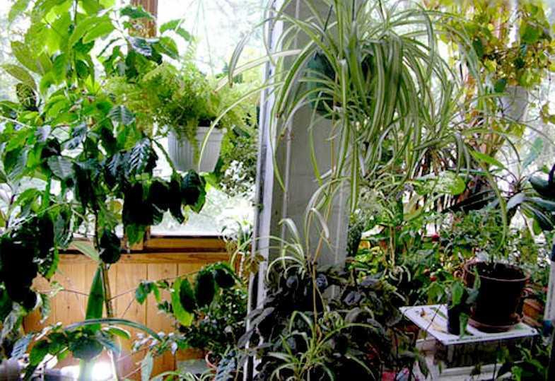 Практика дизайнеров квартир уже показала, что зимний сад на лоджии значительно обогатит интерьер жилища, сделает его гармоничным.