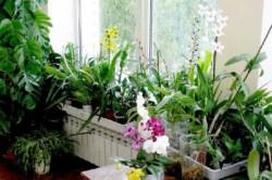 Надо сразу понимать, что зимний сад на балконе - это недешевое сооружение, ведь для его обустройства понадобится множество вещей.