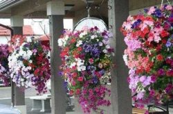 Подвесные цветочные корзинки