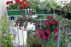 Беспорядочное размещение на балконе горшков и ящиков с растениями, может иметь неприятные последствия.