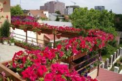Вариант обрамления перил балкона цветами