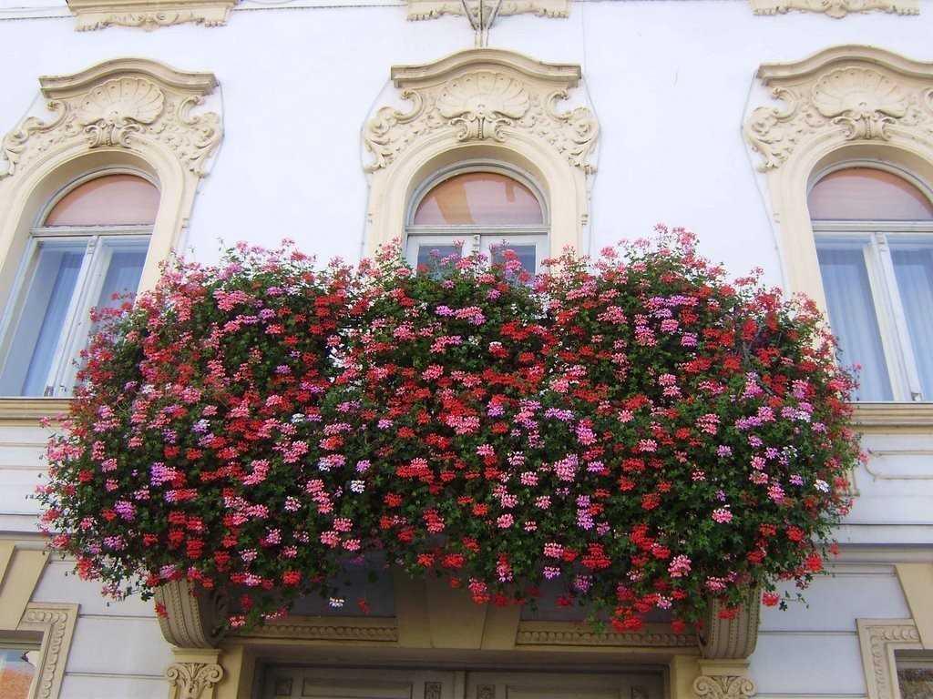 Цветы на балконе украшают здание