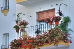 Душистый горошек в оформлении балкона