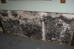 Плесень на стене под обоями